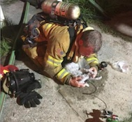 NSB firefighters save 3 cats in house fire in October 2016 / Headline Surfer