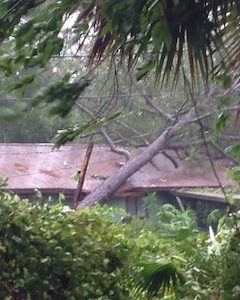 Damage to a house from a fallen tree in Edgewatrer from Hurricane Matthew / Headline Surfer
