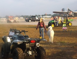 A miniature horse is walked at New Smyrna Beach Balloon & Sky Fest / Headline Surfer
