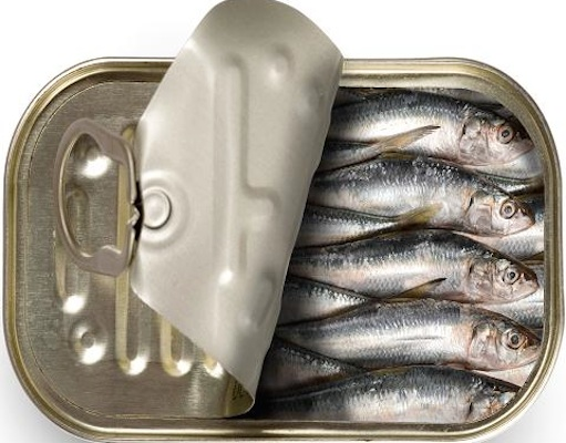 Sardines becoming scarce / Headline Surfer
